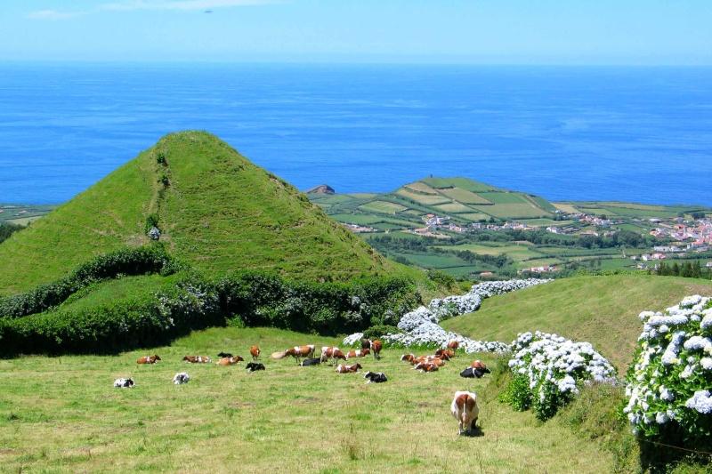 Voyage aux Açores (Sao Miguel) : les platanthères Img_7511