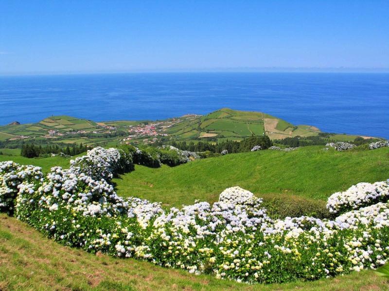 Voyage aux Açores (Sao Miguel) : les platanthères Img_7512