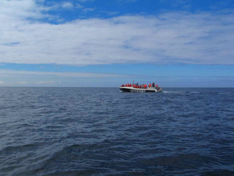 Voyage aux Açores (Sao Miguel) : les platanthères Img_7513