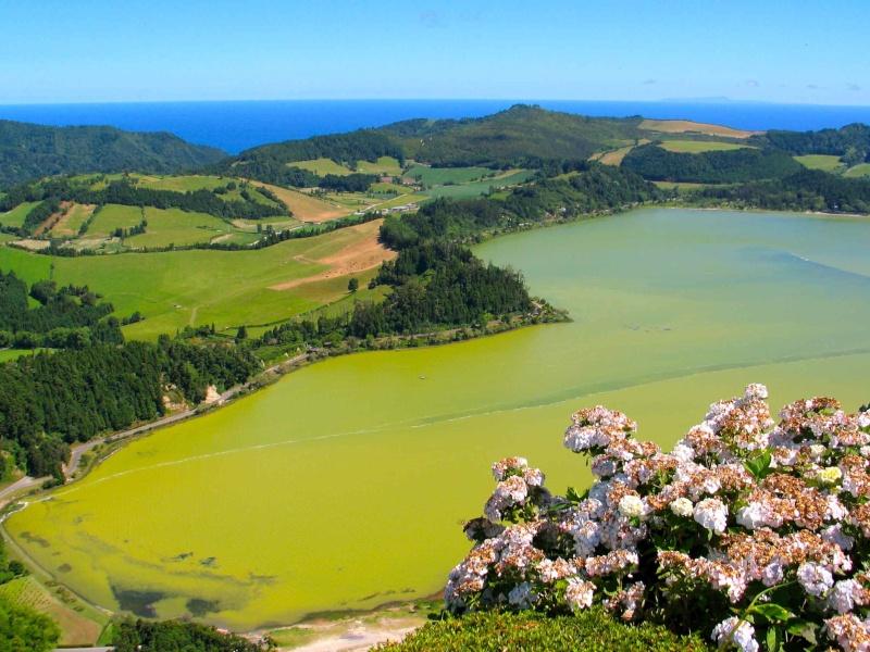 Voyage aux Açores (Sao Miguel) : les platanthères Img_7611