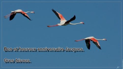 bon anniversaire Jacques - Page 9 Jacque11