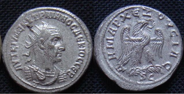 Tétras d'Antioche Tetrad11