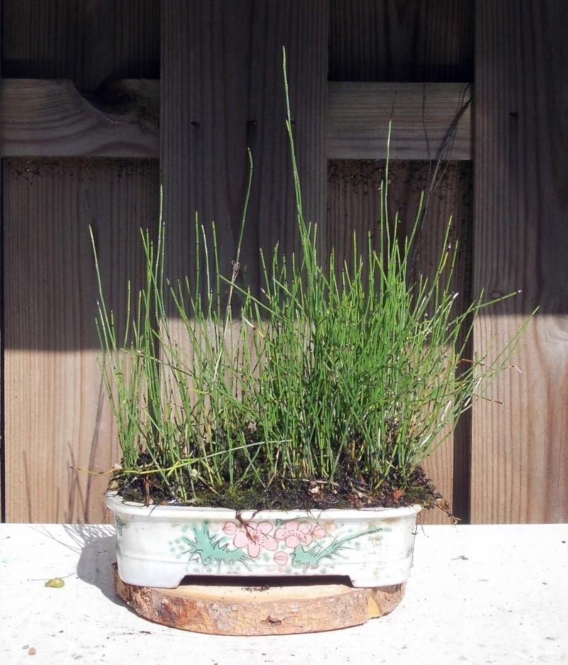 Voici mes plantes d'accompagnements Dscn1212