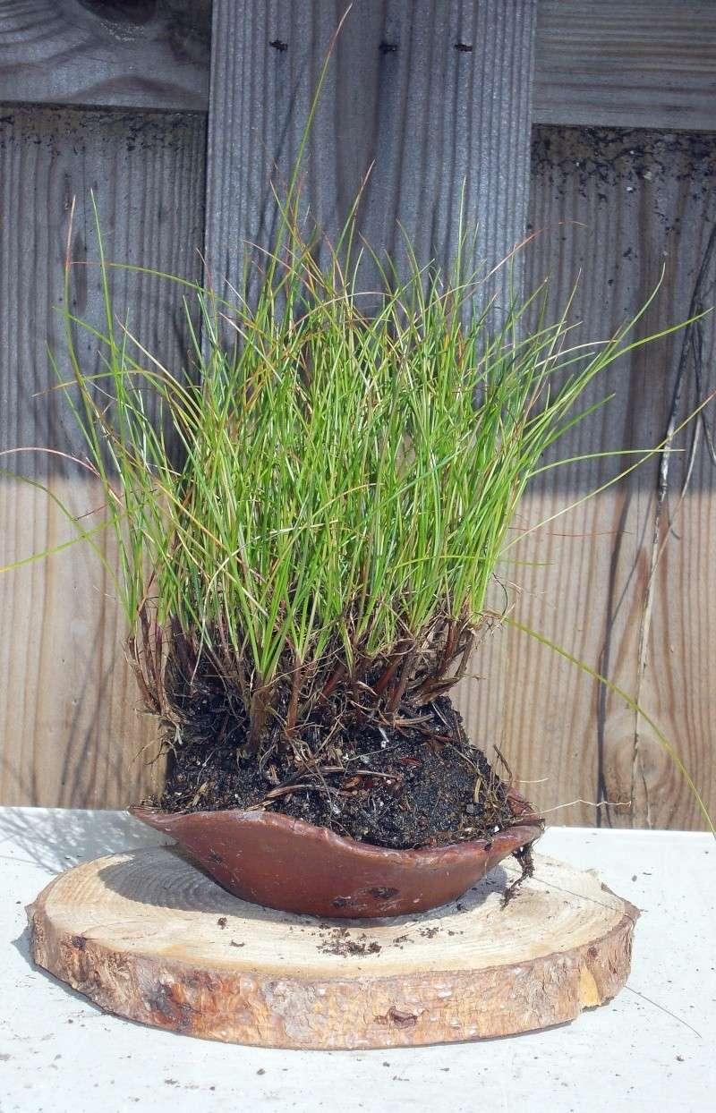 Voici mes plantes d'accompagnements Dscn1214