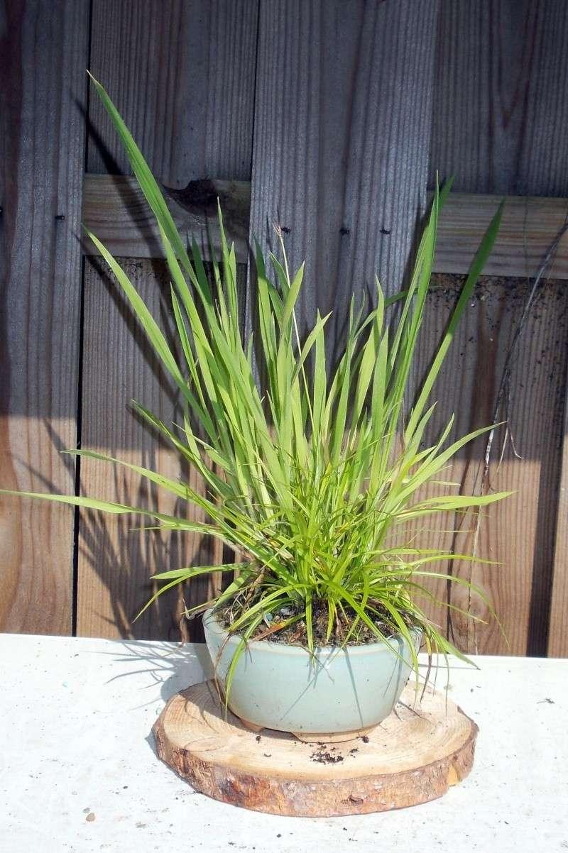 Voici mes plantes d'accompagnements Dscn1215