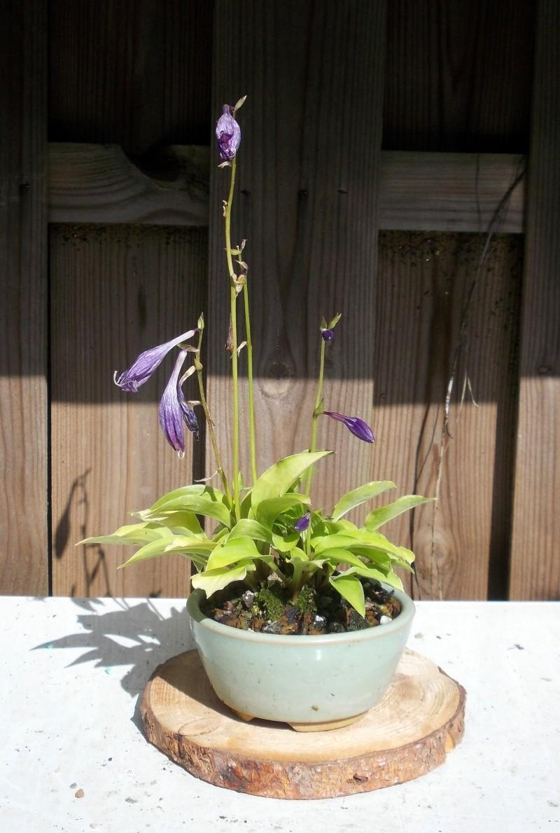 Voici mes plantes d'accompagnements Dscn1220