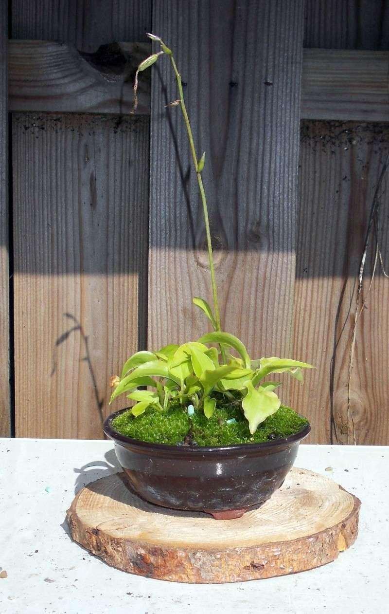 Voici mes plantes d'accompagnements Dscn1221
