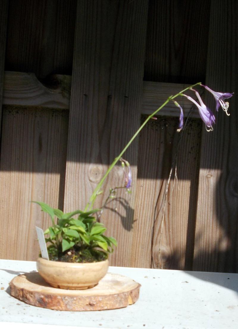Voici mes plantes d'accompagnements Dscn1230