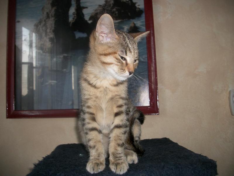 jagna, jolie tigrée née le 10 avril 2014 Imgp0032