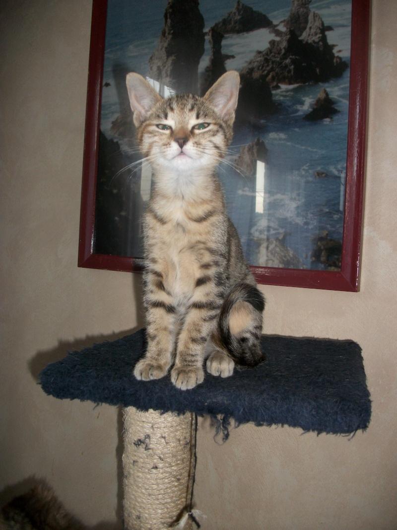 jagna, jolie tigrée née le 10 avril 2014 Imgp0033