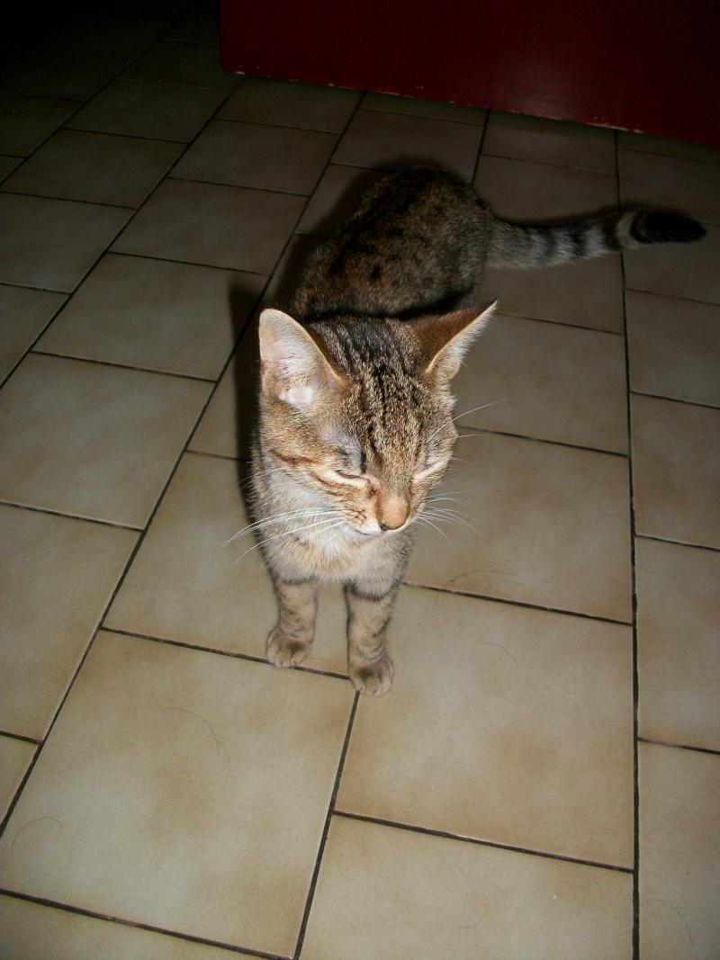 jagna, jolie tigrée née le 10 avril 2014 Imgp0109