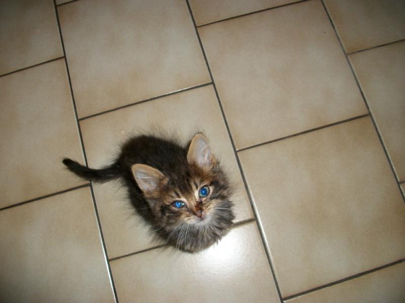 Jipsy (réservée) née le 1er août 2014 Imgp0133