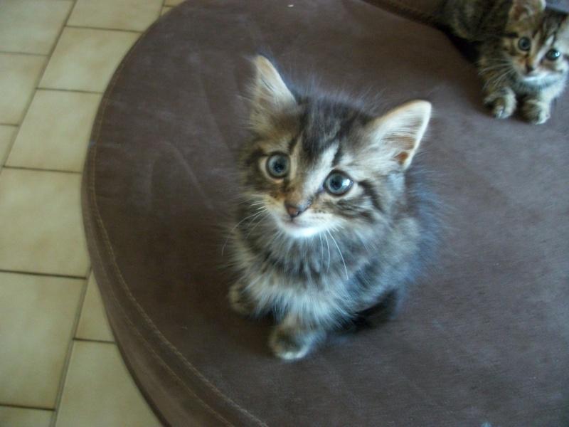 Jipsy (réservée) née le 1er août 2014 Imgp0134