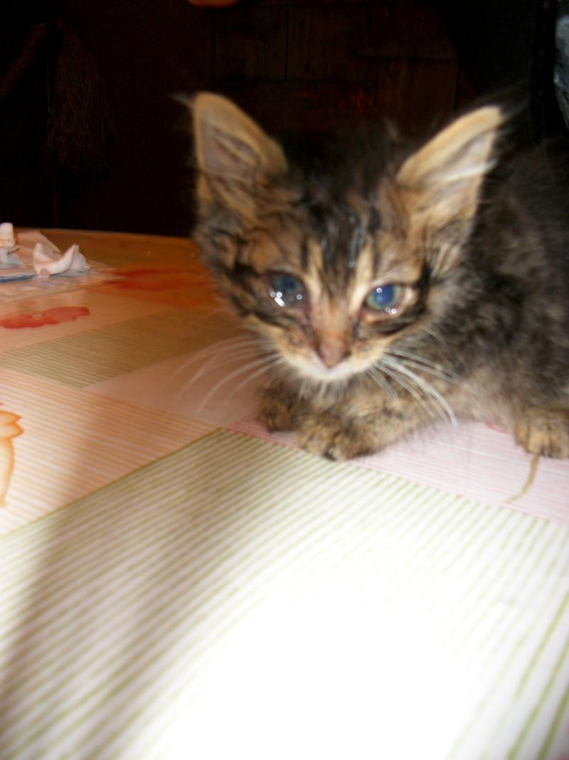 Josie née le 1er août 2014 Imgp0135