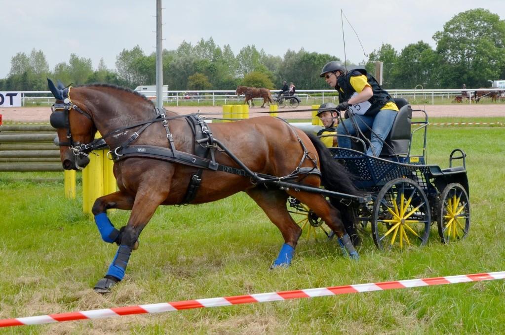 CCA - Lisieux - Juin 2014 - Clip d'images et Photos des concurrents (fin du reportage) Dsc_4710