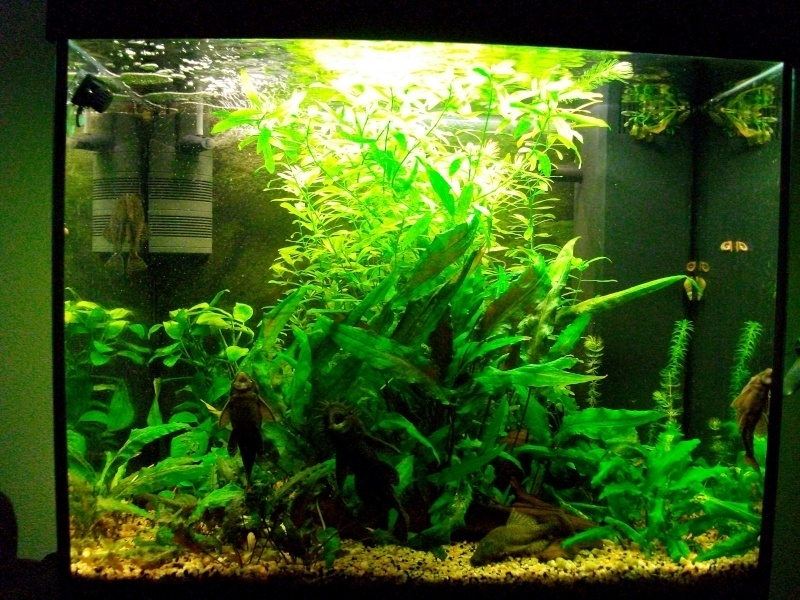 120 Litres version tropical 120l10