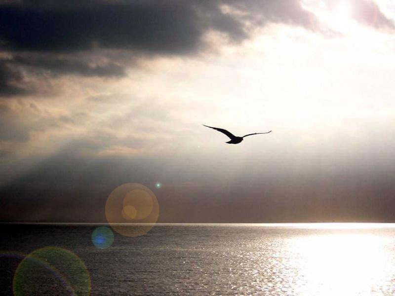 O Padrão é Circular... Bird_f10