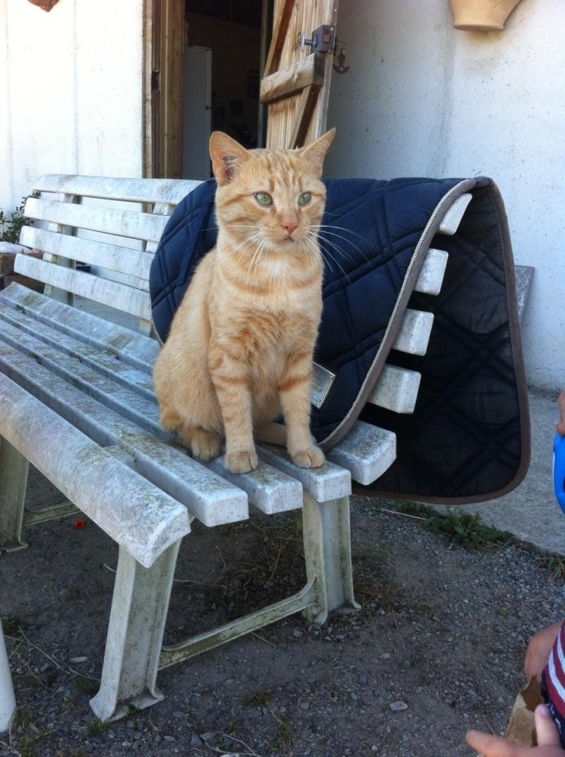 HUGO, chat européen roux, né le 01/05/2012, en sauvetage (frais d'adoption libres) Photo11