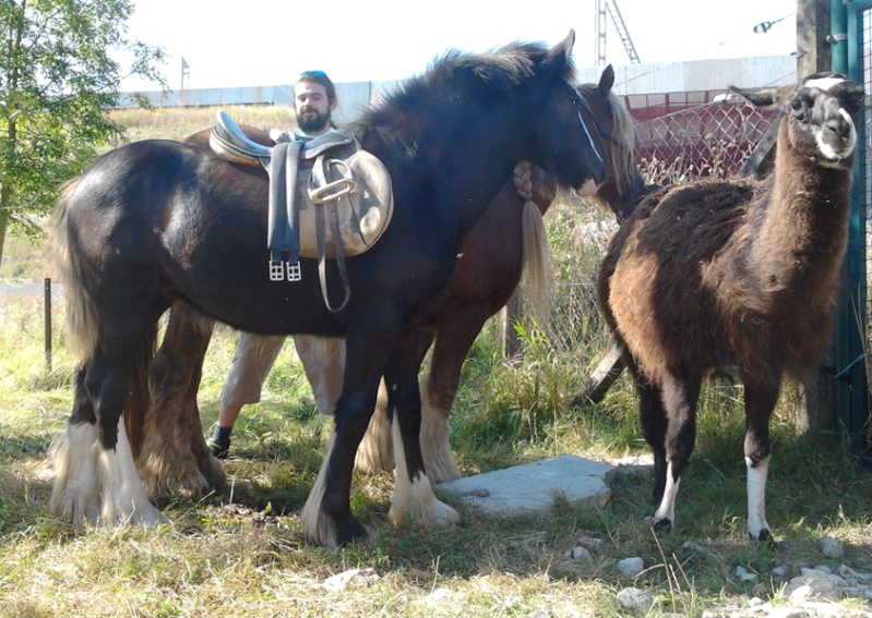 Loelynn des Légendes Celtiques (Riba x Colleen) La classe !! NEW P2 2012-010
