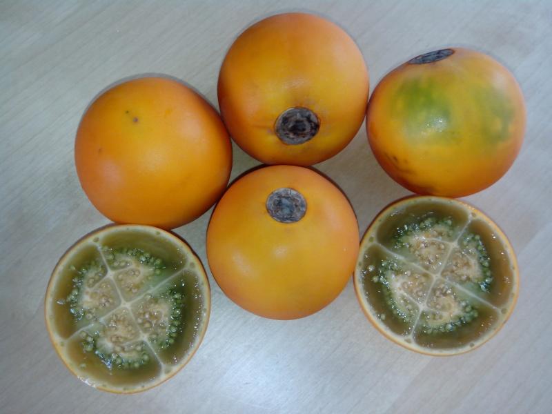 Solanum quitoense Img_2011