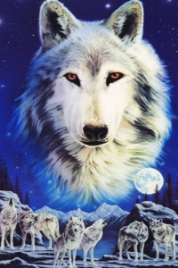 Selection : Loup10