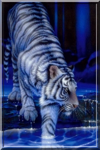Selection : Tigre111