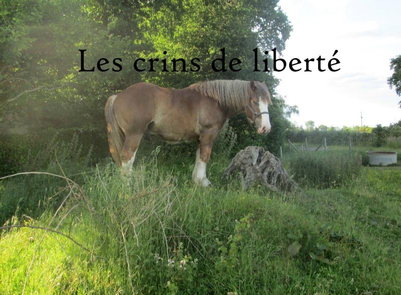 Dpt 35 - Doudou de la rablais - Trait Breton PP - Sauvé par Gaëlle ! (Août 2014) - Page 2 Img_0513