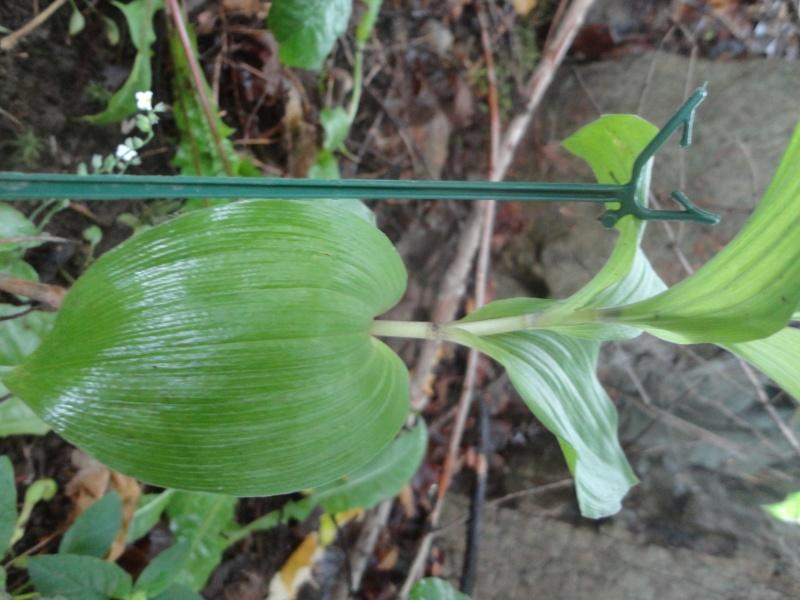Qui suis-je ? 4 plants a identifier Dsc05717