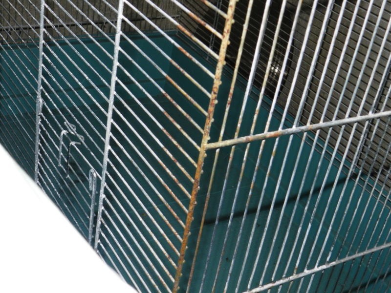 Vends cage Jenny (20 €) 005_710