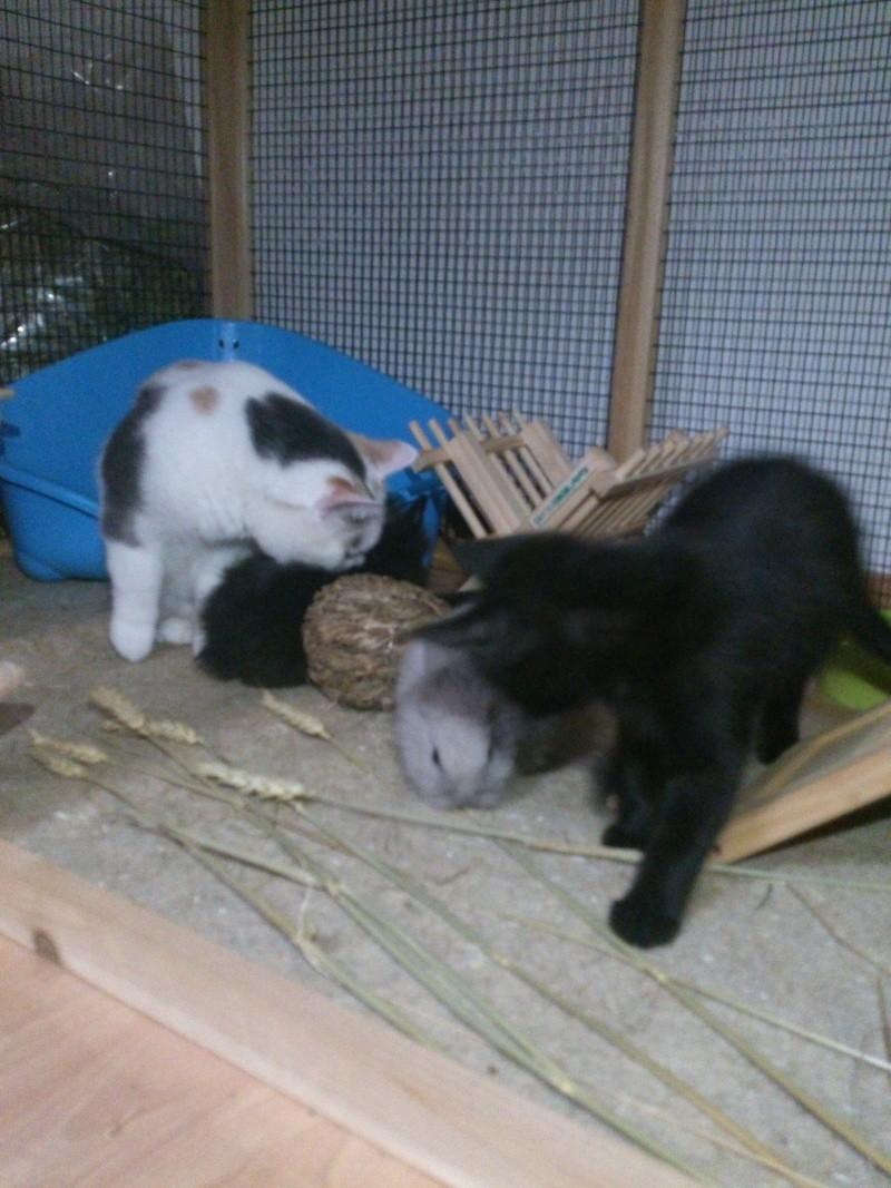 Nouveau chaton dans une famille de 3 minettes Plume_10