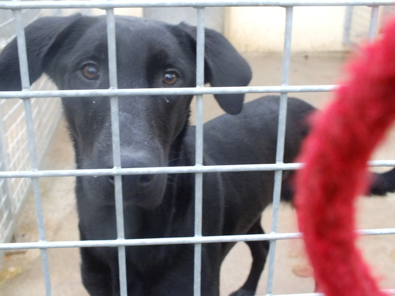 Adoptez moi - RUBI - x berger 7 ans - Refuge de Thierville (55) Dscf2610