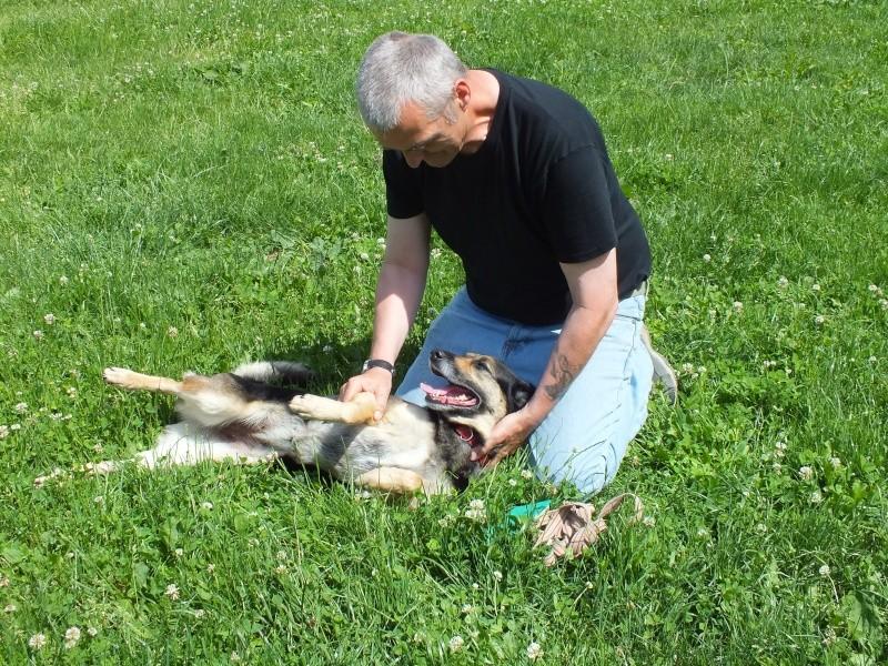 Adoptez moi - RUBI - x berger 7 ans - Refuge de Thierville (55) Dscf3310