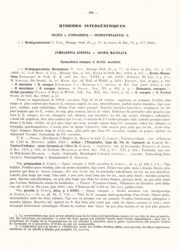 Dactylorhiza fuchsii × Gymnadenia odoratissima  Page_310