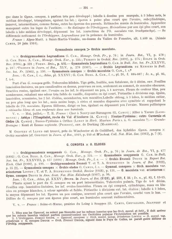 Dactylorhiza fuchsii × Gymnadenia odoratissima  Page_311