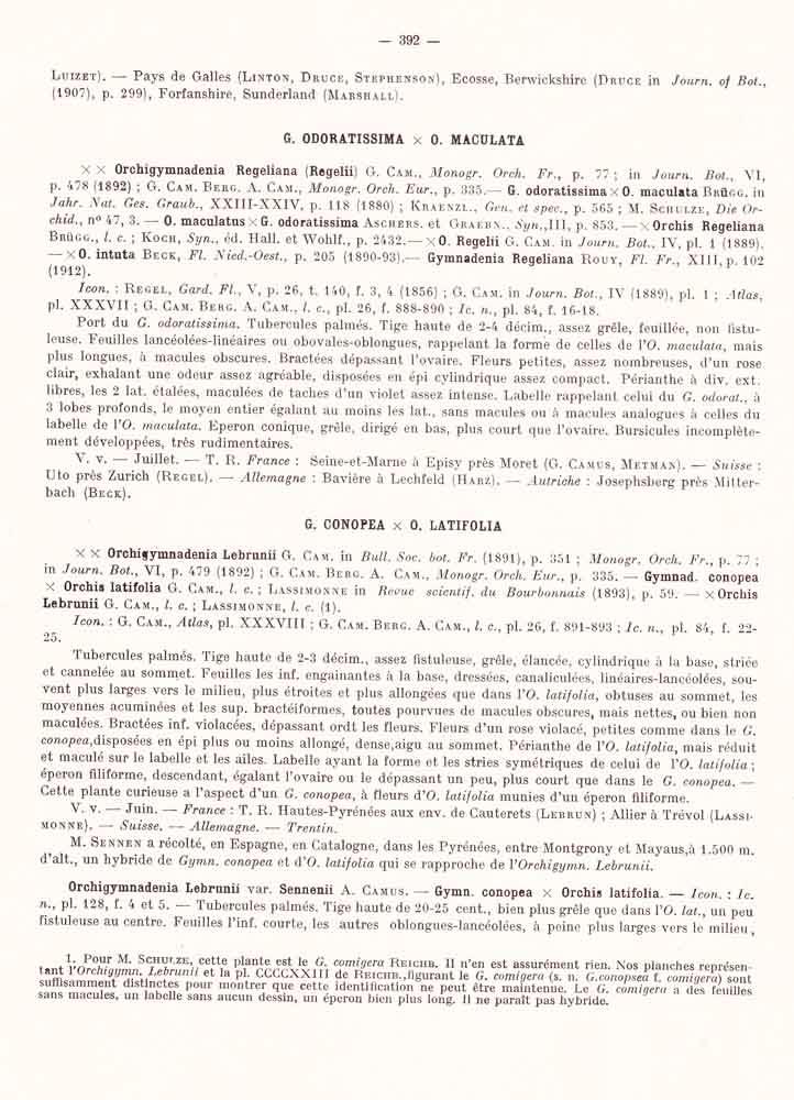 Dactylorhiza fuchsii × Gymnadenia odoratissima  Page_312