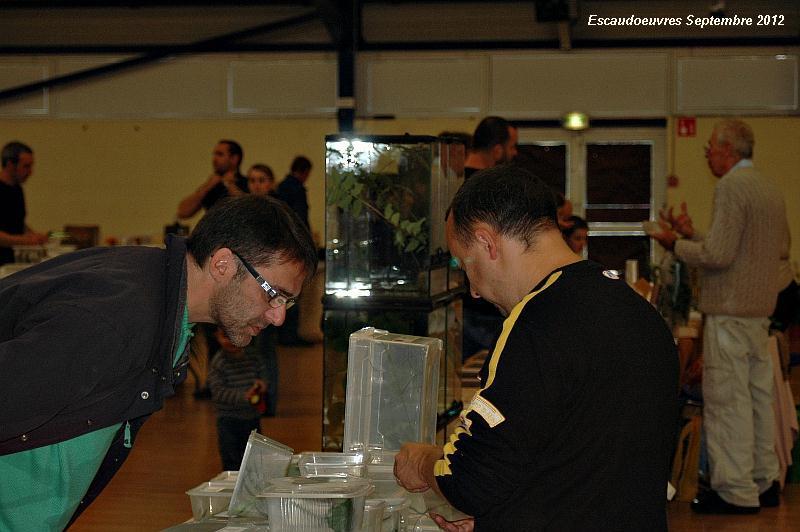 salon entomologie le 23/09/2012 à Escaudoeuvres (59) Escaud10
