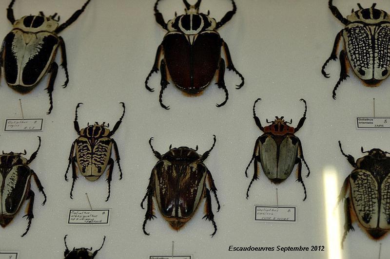 salon entomologie le 23/09/2012 à Escaudoeuvres (59) Escaud11