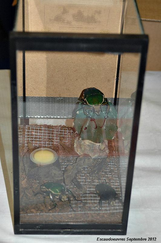 salon entomologie le 23/09/2012 à Escaudoeuvres (59) Escaud13