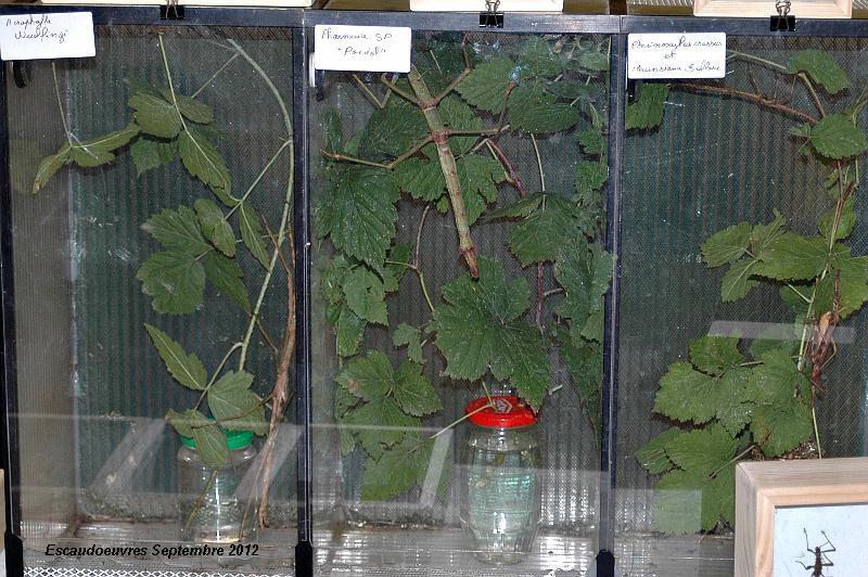 salon entomologie le 23/09/2012 à Escaudoeuvres (59) Escaud14