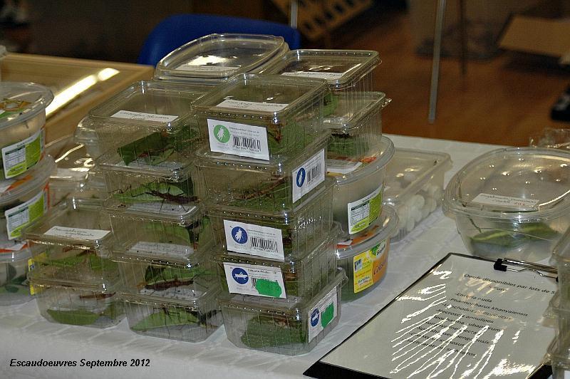 salon entomologie le 23/09/2012 à Escaudoeuvres (59) Escaud15