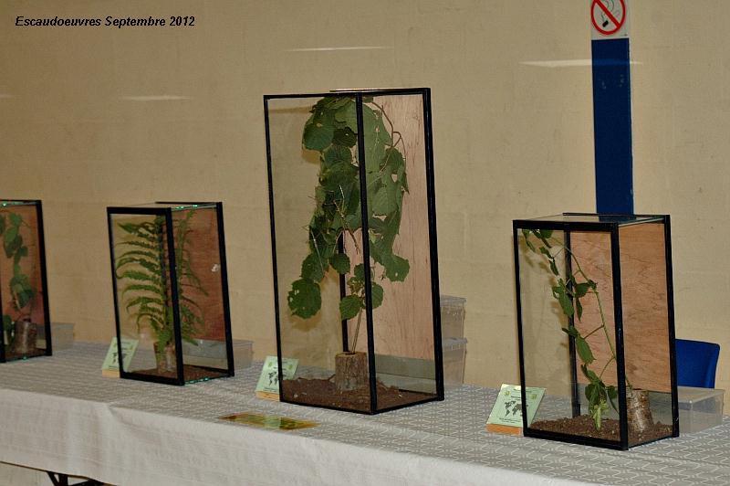 salon entomologie le 23/09/2012 à Escaudoeuvres (59) Escaud16