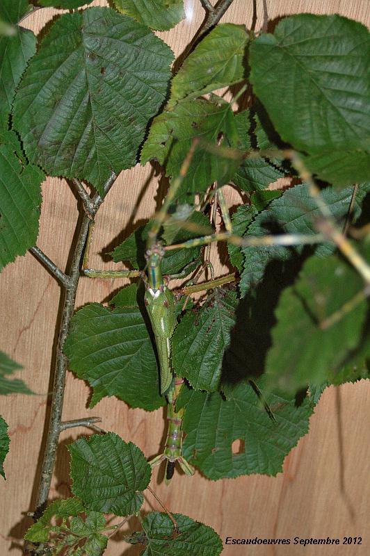 salon entomologie le 23/09/2012 à Escaudoeuvres (59) Escaud17