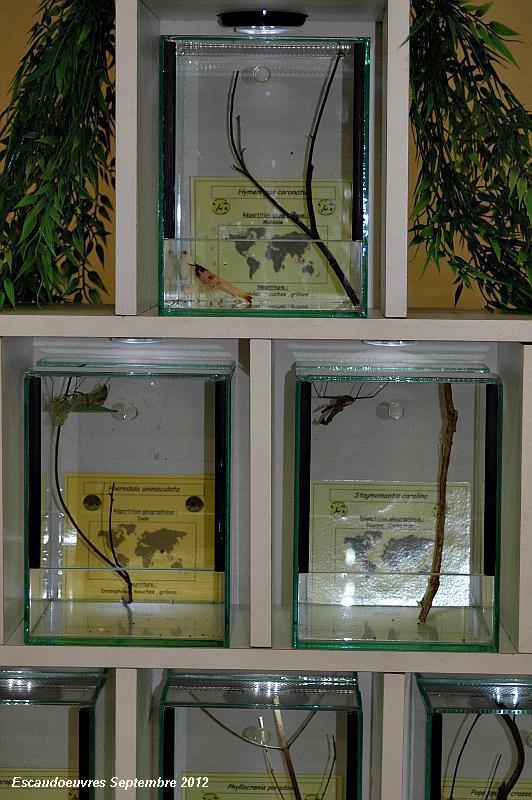salon entomologie le 23/09/2012 à Escaudoeuvres (59) Escaud19