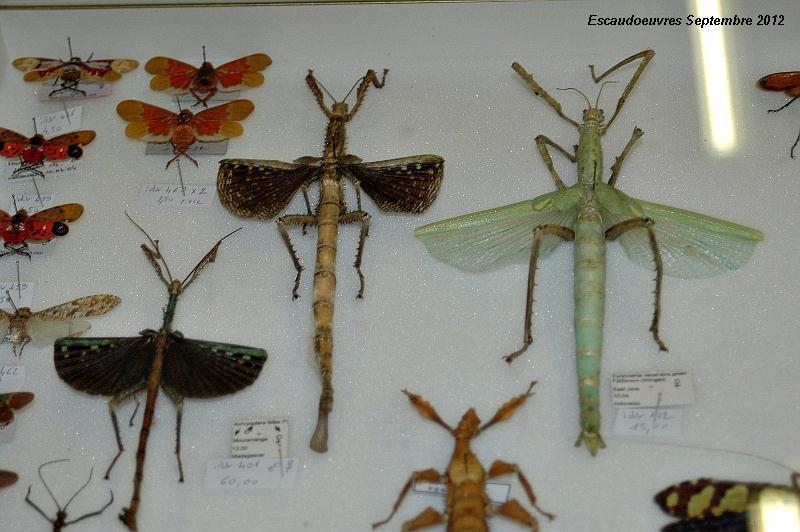 salon entomologie le 23/09/2012 à Escaudoeuvres (59) Escaud22