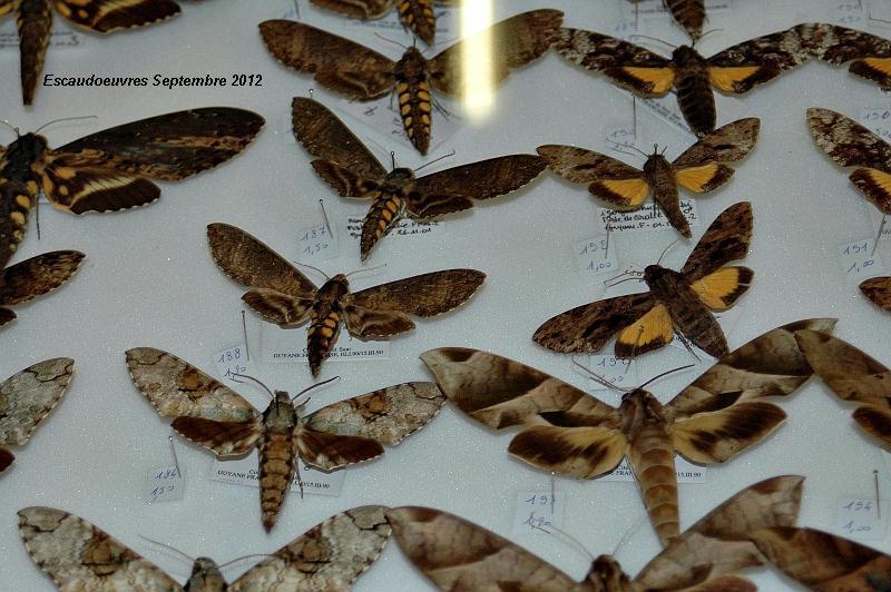 salon entomologie le 23/09/2012 à Escaudoeuvres (59) Escaud23