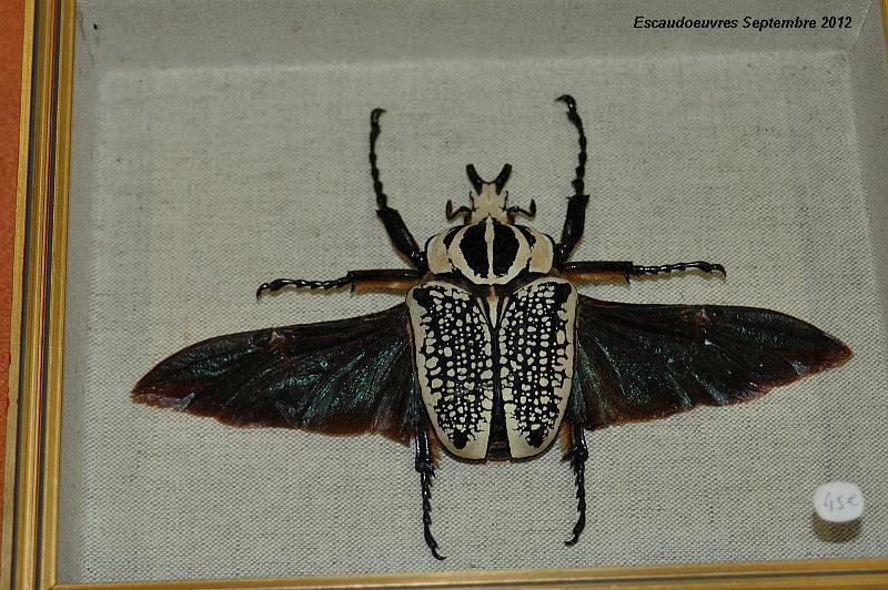 salon entomologie le 23/09/2012 à Escaudoeuvres (59) Escaud26