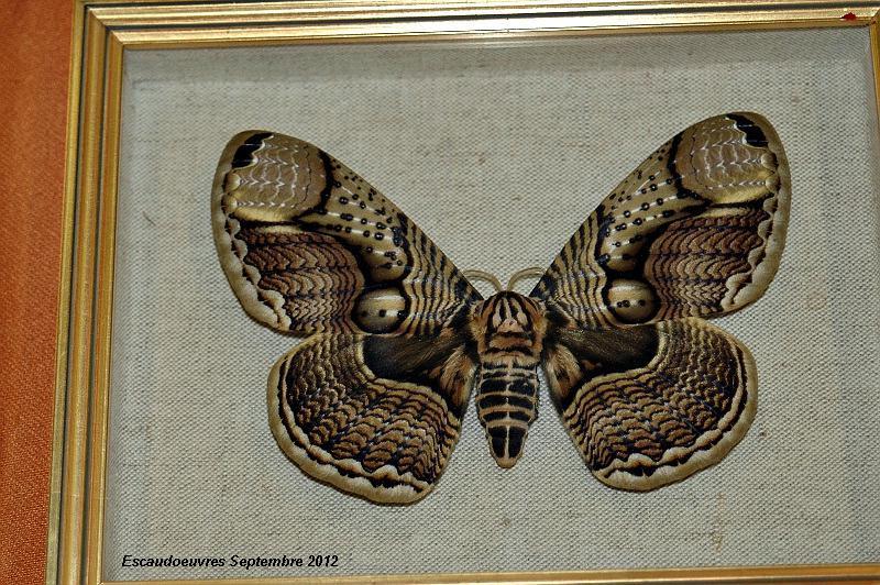 salon entomologie le 23/09/2012 à Escaudoeuvres (59) Escaud27