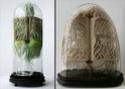 [Art] Livres objets-Livres d'artistes - Page 3 Beauti10