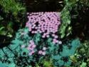 [Land Art] Andy Goldsworthy, Nils-Udo... [INDEX 1ER MESSAGE] - Page 2 Udo_fl10