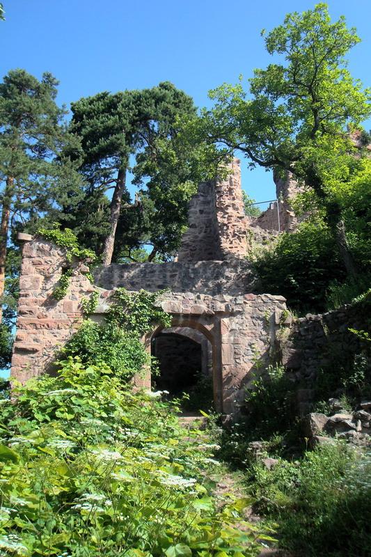 Les trois châteaux de Ribeauvillé  Dsc05711